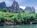 Bamboo forests on the Li River near Guilin, China