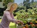 "Walgreens ""Farm"" Director: Sean Ehringer"