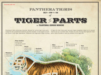 Educational Chart: Tiger Parts | Good 50x70 2010 poster competition winner