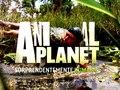 Animal Planet Lubriderm