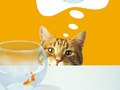 "Nestle / Friskies ""Cats Love Friskies"" print ooh"